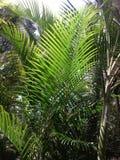自然 库存图片