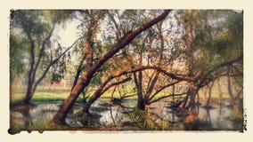 自然 图库摄影