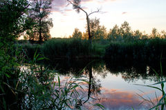 自然 免版税图库摄影