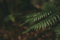 自然 免版税库存图片