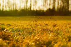 自然& Bokeh 免版税图库摄影