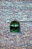 自然againts建筑学 生长在墙壁上的曲拱里面的小绿色植物 库存图片
