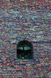 自然againts建筑学 生长在墙壁上的曲拱里面的小绿色植物 库存照片