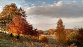 自然autum颜色 免版税图库摄影