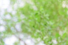 自然Bokeh,被弄脏的bokeh 免版税库存图片