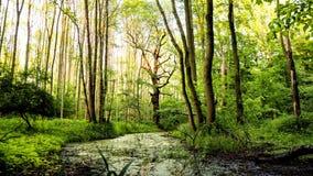 自然oxbow在森林里 免版税库存图片