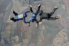 自由下落跳伞运动员三 库存图片