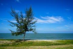 自由形态在海边沙子海滩的立场单独杉树与绿色groundcover植物、海波浪、明亮的蓝天和抽象白色 免版税库存照片