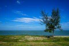 自由形态在海边沙子海滩的立场单独杉树与绿色groundcover植物、海波浪、明亮的蓝天天际和摘要 库存照片