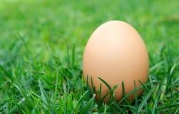 自由放养的鸡蛋 免版税库存照片