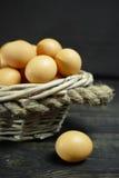 从自由放养的农场的有机brouw鸡鸡蛋 图库摄影