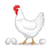 自由放养的白色鸡 免版税库存图片