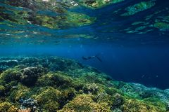 自由潜水者下潜在海洋,与岩石的水下的看法 库存图片