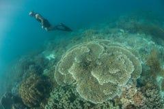 自由潜水者和礁石 免版税库存图片