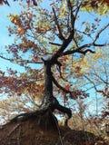 自由的树 库存照片