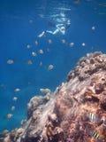 自由的潜水员在深海 库存照片