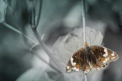 自由的蝴蝶标志 库存图片