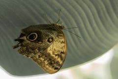 自由的蝴蝶标志 图库摄影