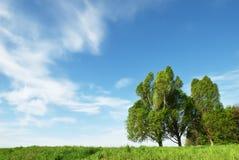 自由草甸常设结构树 免版税库存图片