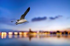 自由飞行通过我们的翼 库存照片