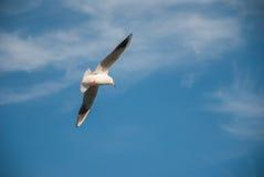 自由飞行鸟在云彩和土地无危险天空的 库存图片