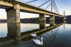 自由bridg在诺维萨德,塞尔维亚 库存图片