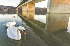 自由bridg在诺维萨德,塞尔维亚 免版税库存图片