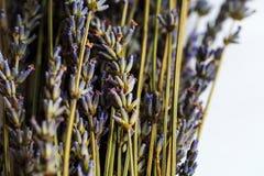 自自然光窗口白天烘干的淡紫色 图库摄影