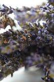 自自然光窗口白天烘干的淡紫色 免版税库存图片