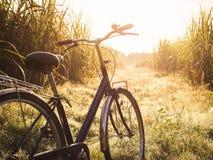 自行车乘驾室外夏天草甸领域日出 图库摄影