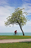 自行车偏僻的通过的结构树 库存图片