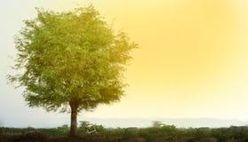 自行车停放了在一棵树下在一个晴朗的早晨 农村的横向 免版税库存照片