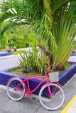 自行车加勒比墨西哥桃红色热带 免版税图库摄影