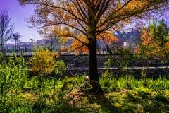 自行车变色蜥蜴和狗 免版税库存照片