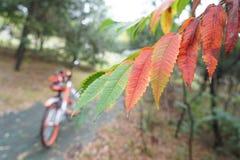 自行车和叶子在秋天 库存图片