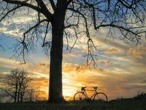 自行车和树剪影 免版税图库摄影