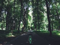 自行车和森林 图库摄影