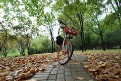 自行车和路在秋天 免版税库存图片