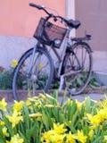 自行车和水仙在斯德哥尔摩 免版税图库摄影