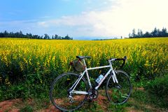 自行车在庭院里 免版税图库摄影