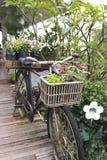 自行车在庭院里 免版税库存图片