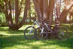 自行车在春天森林里 免版税库存照片