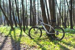 自行车在春天森林里 库存照片