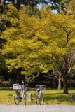 自行车在树下 免版税库存图片