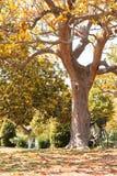 自行车在树下 免版税库存照片