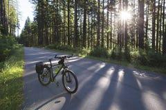 自行车在森林里 库存照片