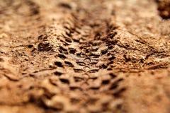 自行车在泥泞的足迹皇族的轮胎轨道 疲倦在湿泥泞的路,抽象背景,纹理材料的轨道 免版税图库摄影