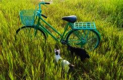 自行车在草甸 图库摄影