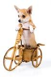 自行车小狗 库存图片