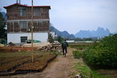 自行车游览和循环对村庄在阳朔,桂林,有美好的石灰岩地区常见的地形风景的广西附近在中国 免版税库存图片